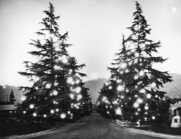 altadena_mile_of_christmas_trees_1920s