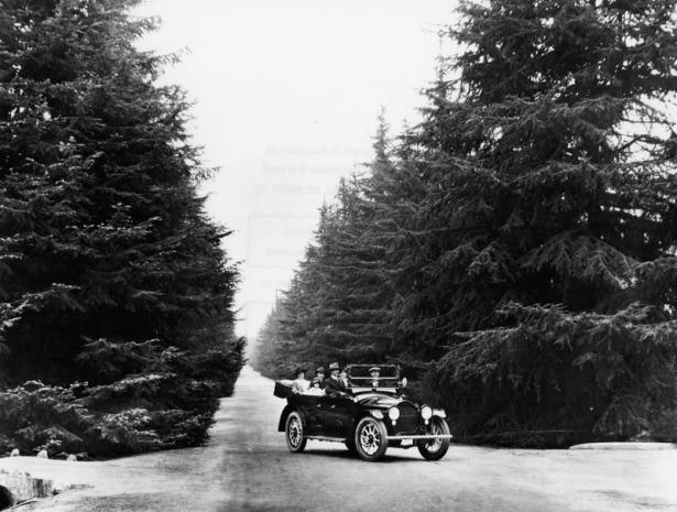 Santa_Rosa_Avenue__Altadena_trees_1920s